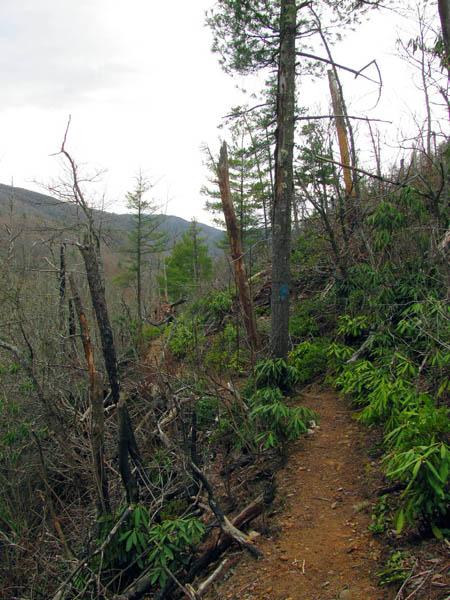 Rattlesnake Ridge Trail