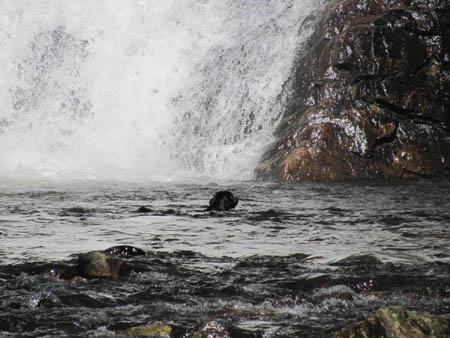 dog at Laurel falls