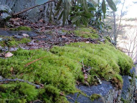 moss along backbone trail