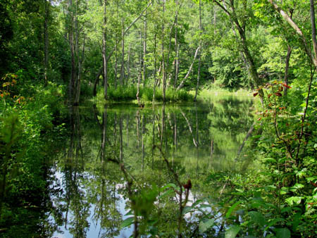 South Holston river as seen from Osceola Island trail