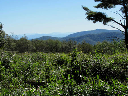 Grasslands view