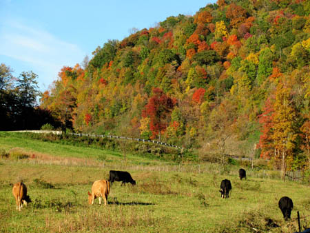 Cows and colors near Sam's Gap