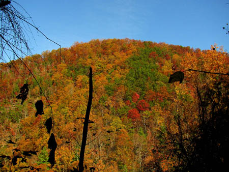 Meatgrinder Ridge showing Fall colors