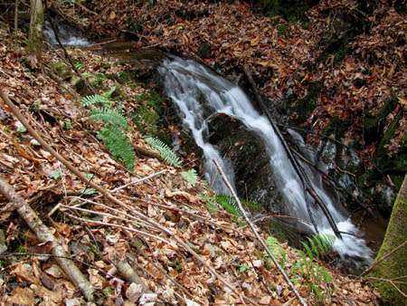 Cascades along upper Longarm Branch Creek
