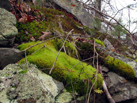 mosses and rocks