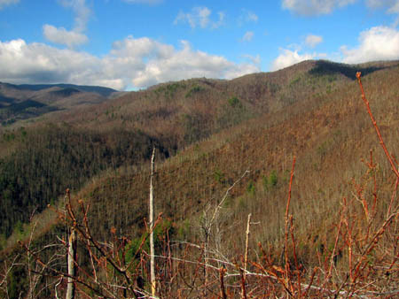 View towards Big Butte (left) and Wilson Knob (right)