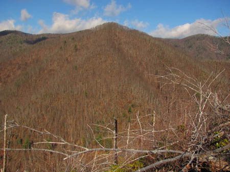 View of Wilson Knob and Frozen Knob