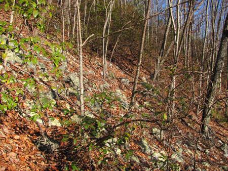 boulder-garden'